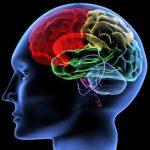 脳科学を応用した英語の勉強法